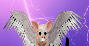 AngryPiggy