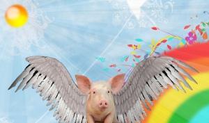 Serious Piggy