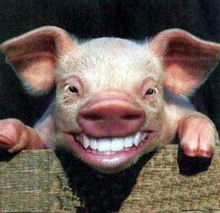 Big-Tooth-Pig2-798260