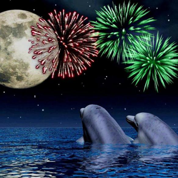 dolphins-watching-fire-works