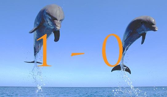 A20337 Bottlenose Dolphin Tursiops truncatus jumping