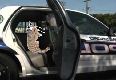 ArrestedPrawn