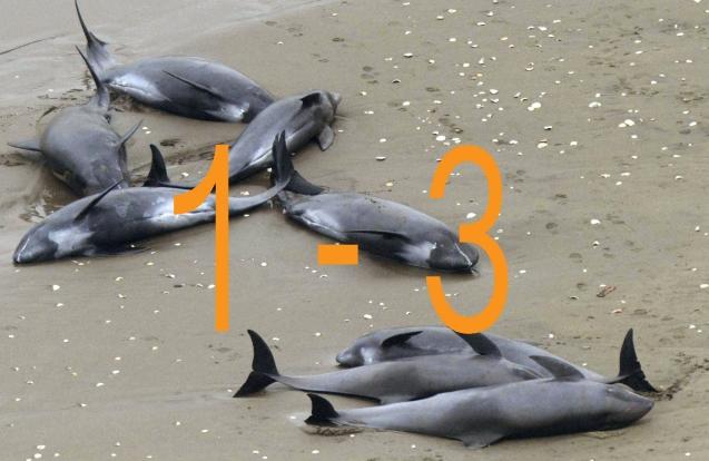BeachedDolphins 1-3