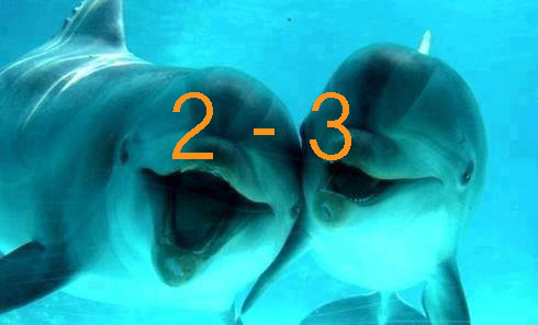 Dolphins2-3