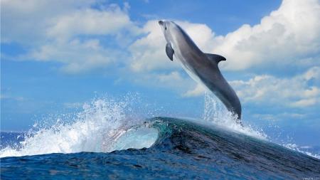 leapdolphin