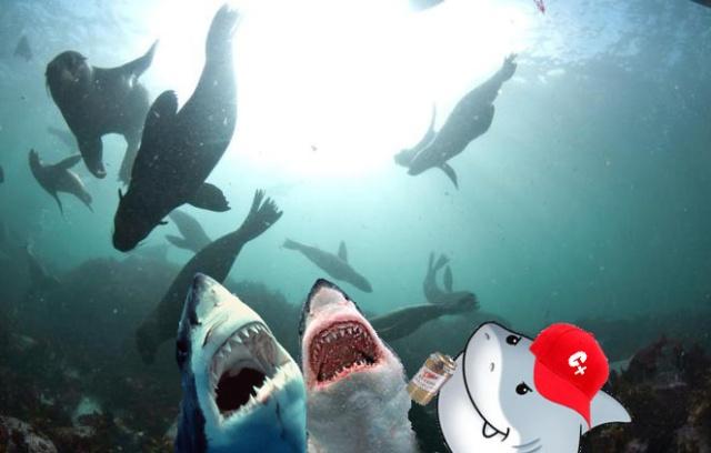 SharksCheckingoutSeals