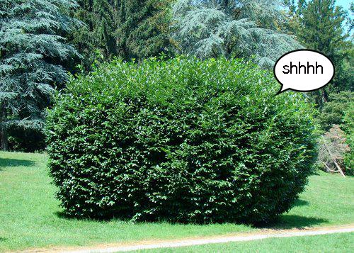 bush copy